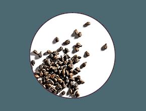 ingredient polyphenols